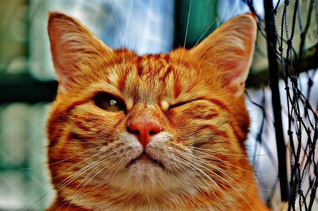 mrknutí kočky